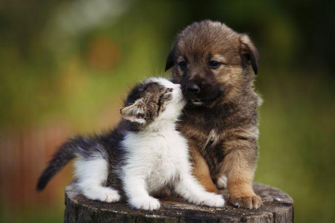 Crema News - Arriva anche a Crema il regolamento per il benessere animale